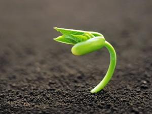 plant budding